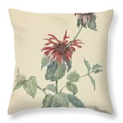 Red Bergamot In A Landscape, Aert Schouman Surroundings Of, C. 1750 - C. 1775 Throw Pillow