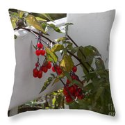Red Berries On A White Fence Throw Pillow