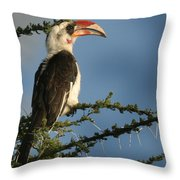 Red Bill Hornbill Throw Pillow