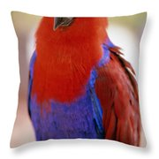 Red Blue Macaw Throw Pillow