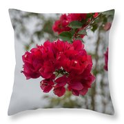 red bougainvillea in Laguna Guerrero Throw Pillow