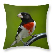 Red Breasted Grosbeak Throw Pillow
