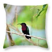 Red Breasted Humming Bird  Throw Pillow