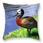 Red Breasted Wood Duck Throw Pillow