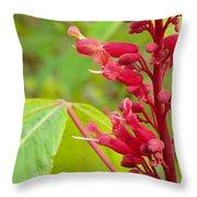 Red Buckeye Throw Pillow