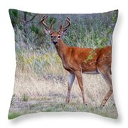 Red Bucks 1 Throw Pillow by Antonio Romero