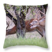 Red Bucks 5 Throw Pillow by Antonio Romero