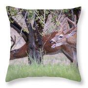 Red Bucks 5 Throw Pillow