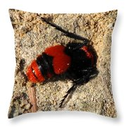 Red Burrowing Insect Throw Pillow