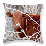 Red Calf  Hideaway Throw Pillow