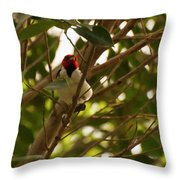 Red-capped Cardinal Digital Oil Throw Pillow