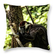 Red-capped Mangabey Throw Pillow