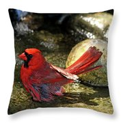 Red Cardinal Bathing Throw Pillow