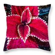 Red Coleus Throw Pillow
