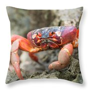 Red Crab, Christmas Island Throw Pillow