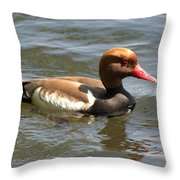 Red-crested Pochard Throw Pillow