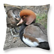 Red Crested Pochard Duck Throw Pillow