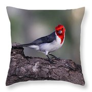 Red Crested Posing Throw Pillow