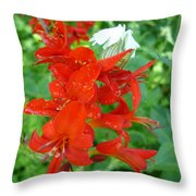 Red Crocosmia Lucifer Throw Pillow