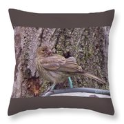 Red Crossbill Female  Indiana  Summer Throw Pillow