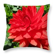 Red Dahlia In The Green Throw Pillow
