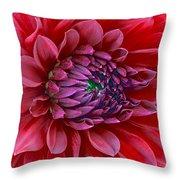 Red Dalia Up Close Throw Pillow