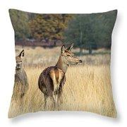 Red Deer 7 Throw Pillow