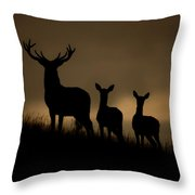 Red Deer At Dawn Throw Pillow