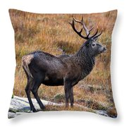 Red Deer Stag In Autumn Throw Pillow