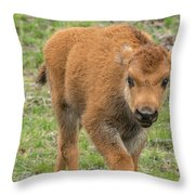 Red Dog Bison In Yellowstone Throw Pillow