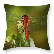 Red Dragon Fly Throw Pillow