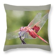 Red Dragonfly 5 Throw Pillow