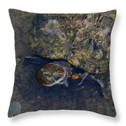 Red Eared Slider Turtle Throw Pillow