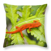 Red Eft Eastern Newt Throw Pillow