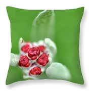 Red Everlasting At Amatzia Forest -1 Throw Pillow