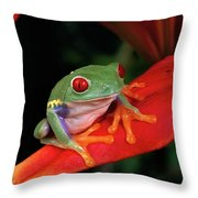 Red-eyed Tree Frog Agalychnis Throw Pillow
