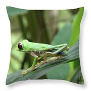 Red Eyed Tree Frog On A Leaf Throw Pillow
