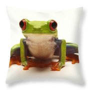 Red-eyed Tree Frog Throw Pillow
