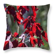 Red Fall Leaves In The Sun Throw Pillow