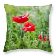 Red Field Poppies Throw Pillow