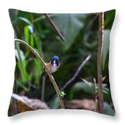 Red-flanked Bluetail 2 Throw Pillow