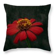 Red Flower 5 Throw Pillow