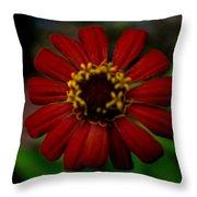Red Flower 8 Throw Pillow