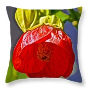 Red Flower At Pilgrim Place  In Claremont-california Throw Pillow