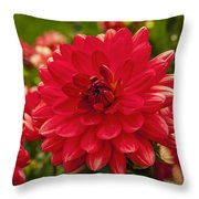 Red Flower Close Up Throw Pillow
