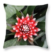 Red Flower With White Tips Throw Pillow