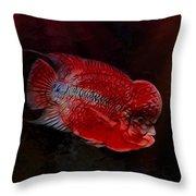 Red Flowerhorn Cichlid Throw Pillow