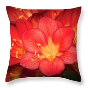 Multiple Red Flowers In Bloom Throw Pillow