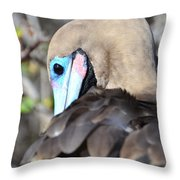 Red Footed Booby Throw Pillow