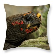 Red-footed Tortoise Throw Pillow
